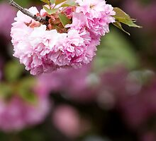 A Mother's Day Blossom by Andrew Mark