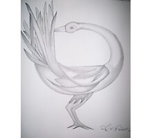 Sankofa bird Photographic Print