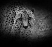 Stalking by DanielTMiller