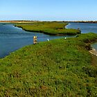 Bolsa Chica Ecological Reserve  by Gili Orr