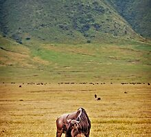 Lonely Wildebeest by Scott Ward