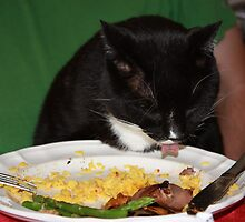 The Further Adventures of Ta-moose the Cat: food critic by Colleen Salls