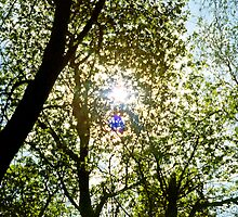 Sunburst thru Spring Trees by SteveOhlsen