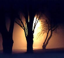 Lamplight thru Foggy Midnight Trees by SteveOhlsen