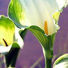 Green Goddess erum lilies by Fineli