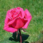 Flowers by Tamara Lindsey