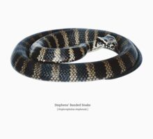 Stephens' Banded Snake (Hoplocephalus stephensii) by Shannon Benson