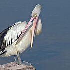 Big Bird by mspfoto