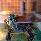 The Turtle  by Mathew Woodman