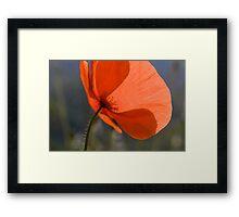 Poppy! Framed Print