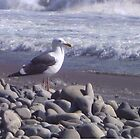 Seagull by Paula Thompson