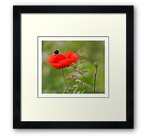 Flying... Framed Print