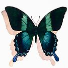 """Papilio blumei"" Watercolor by Paul Jackson"