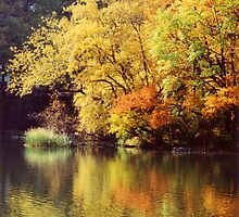 Central Park In Autumn by Alison Badgery