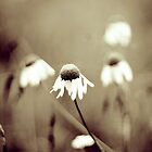 Daisy Dreams by Kjersti Andreassen