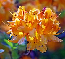 Orange Rhododendron by Fran0723