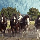 Four Working Horses - South Gippsland, Victoria by Bev Pascoe