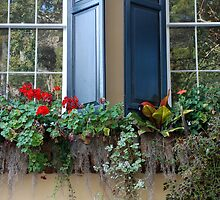 Charleston flower window by justcallmetom