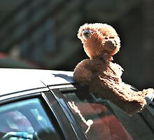 Teddy Car In SunLight by terrebo