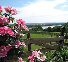 Oak Glenn Vineyards and Winery, Missouri by Sherry Hunt