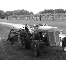 """Tractor of the Vineyard"" by Sherry Graddy"