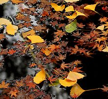 Autumn Leaves by margotk