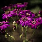 Purple Flowers by Rachel Blumenthal