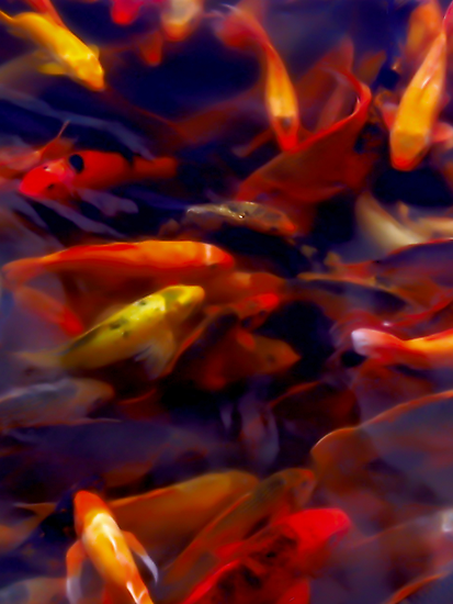 Red motion by Jimmy Jobson
