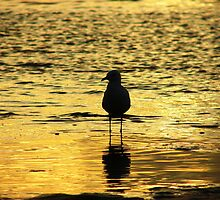 Dreamy Gull by Martice