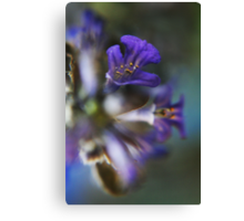 Violet  (from wild flowers collection) Canvas Print