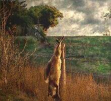 Fox hunt by TmacScapes