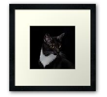 Smokey's whiskers Framed Print
