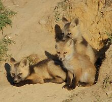 Fox Pups at the Den by Albert Dickson