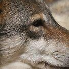 Wolf by Mooguk