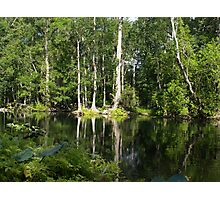 Reflections On The Ocklawaha River Photographic Print