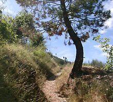 Provencal track by solena432