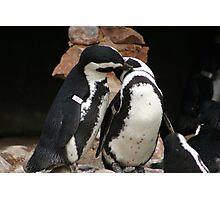 Penguin affection Photographic Print