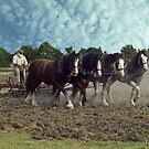 Working Horses in Korumburra by Bev Pascoe