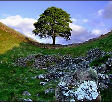 Sycamore Gap by Bootkneck