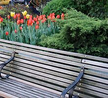 Broadway Mall Bench by DarylE