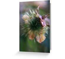 to burst open (from wild flowers collection) Greeting Card