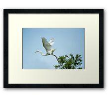 Egret at Take-Off  Framed Print