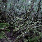 Under the Gondwana Rainforest Canopy  by cradlemountain