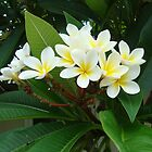 Frangipani by DoubleCreations