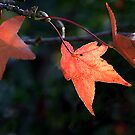 Autumn colours 5 by MikeO