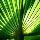 Green Fan by Monique Basson