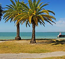 Magical Palms and the Ocean in Sarasota,Florida by coralZ