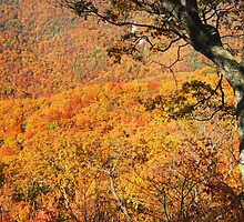 Fall Foliage, Shenandoah National Park by Stephen Vecchiotti