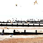 Seagulls by lousutherland