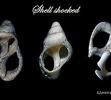 Shell shocked by Steve  Woodman